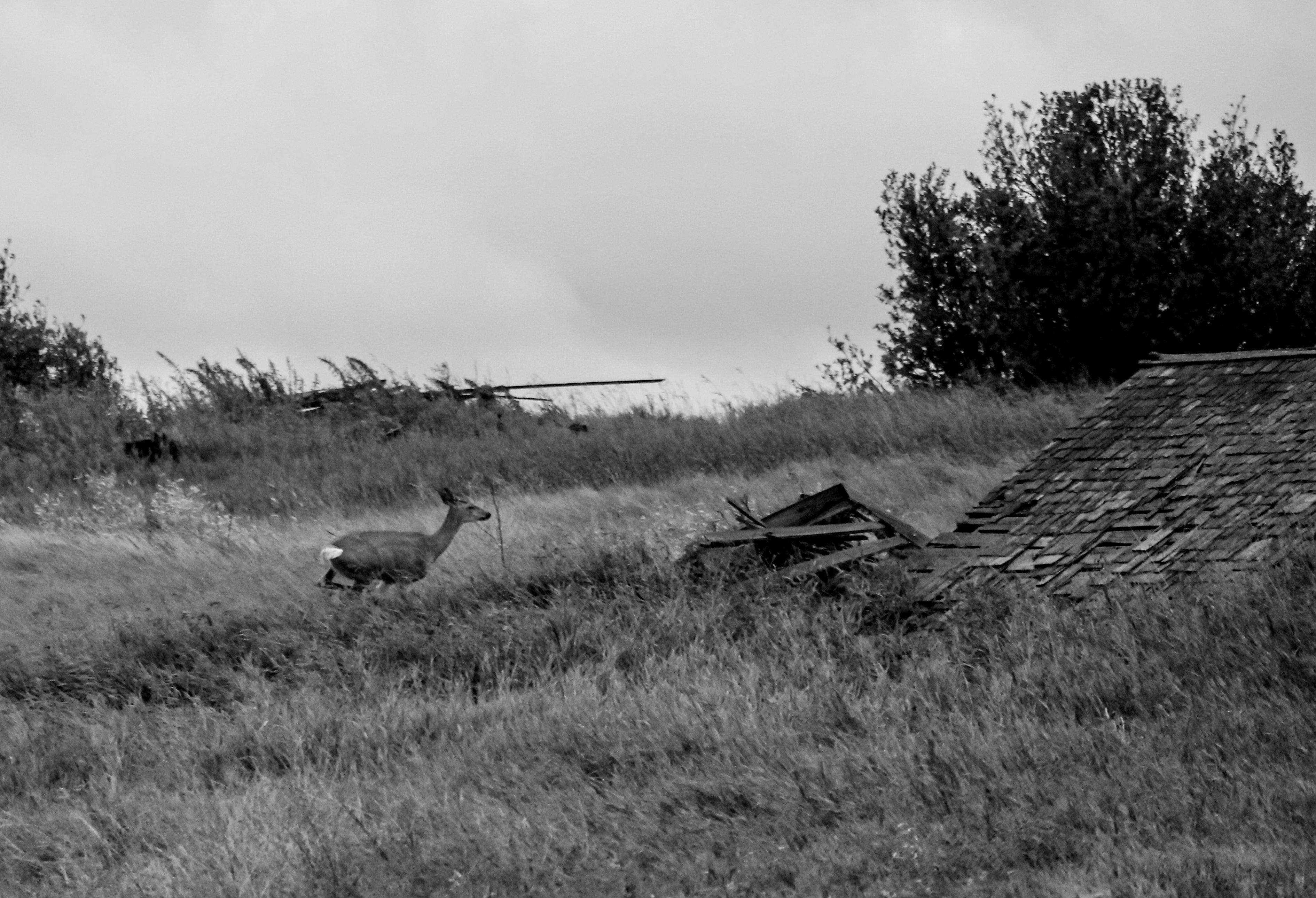 Open Roads & Tilting Barns