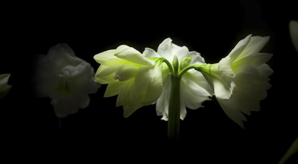 Spring: Jamie Scott's Masterpiece