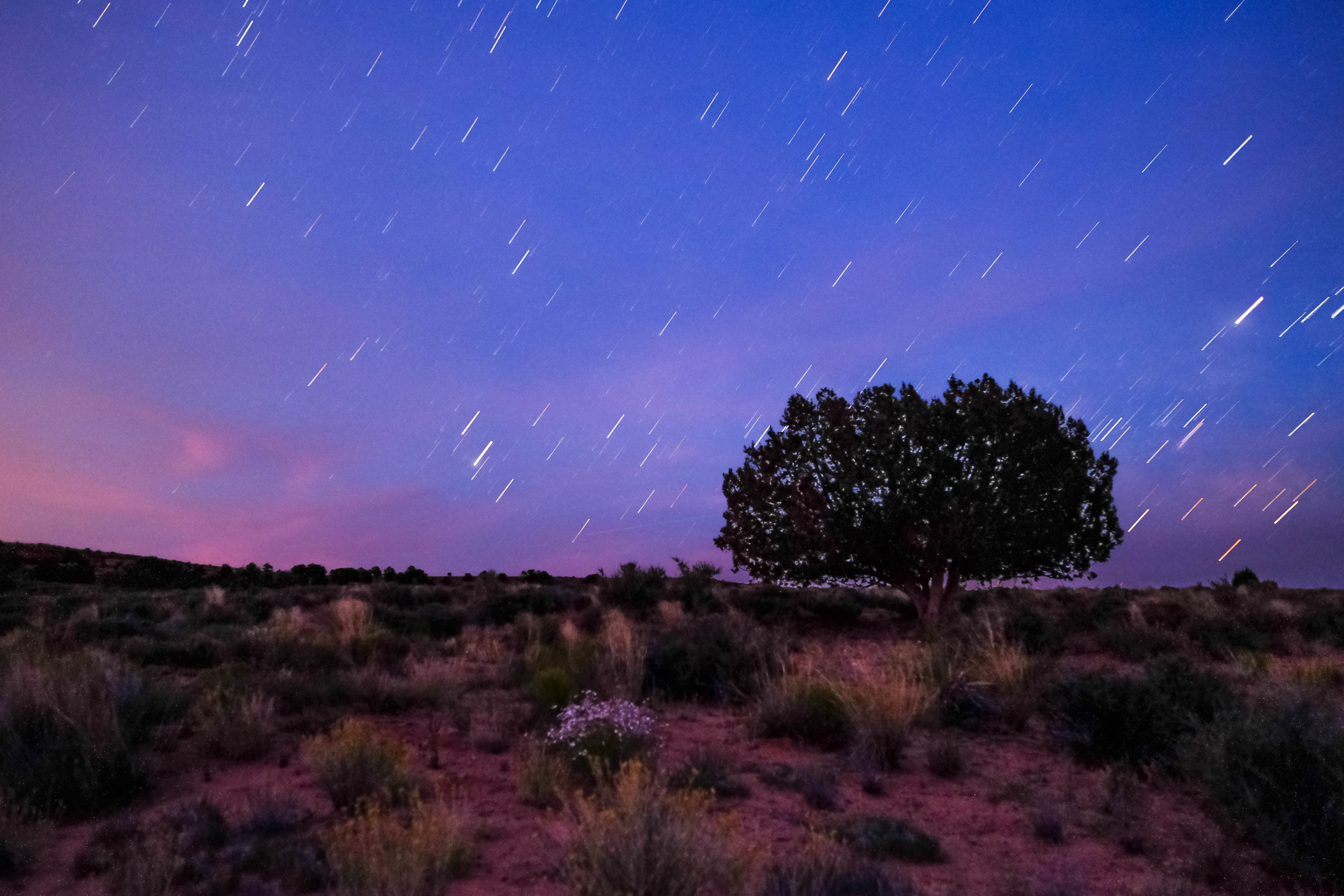 Navajo tree and stars