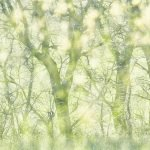 Featured at LensCulture: Michel Giaccaglia's 'Wild Garden'